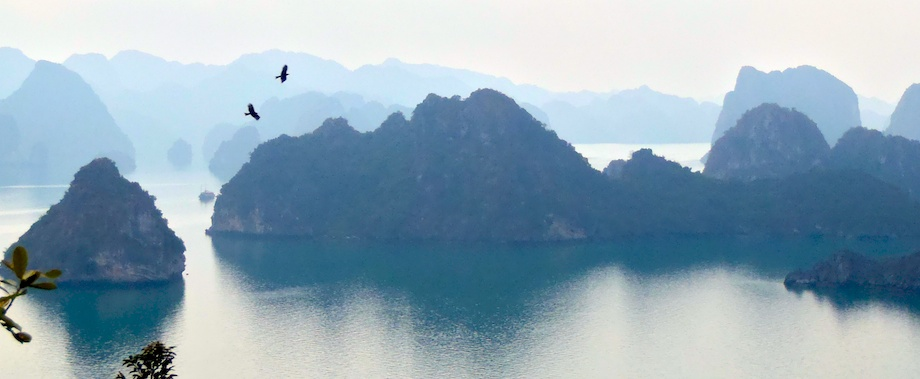 Eagles Above Ha Long Bay