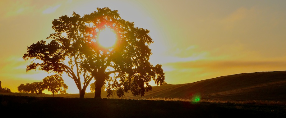 Sunrise SE of Paso Robles in California wine country